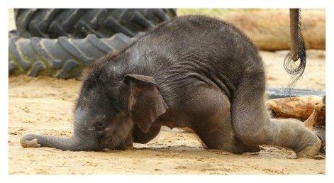 awkward baby elephant