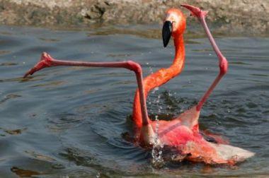 awkward flamingo